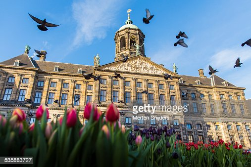 Tulips and pigeons outside Paleis op de Dam