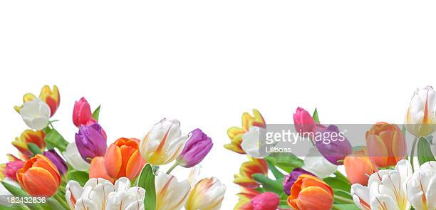 Tulips Banner