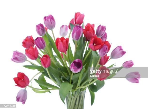 Tulipani Bouquet (XL