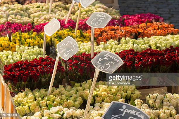 Tulips for sale in Euros