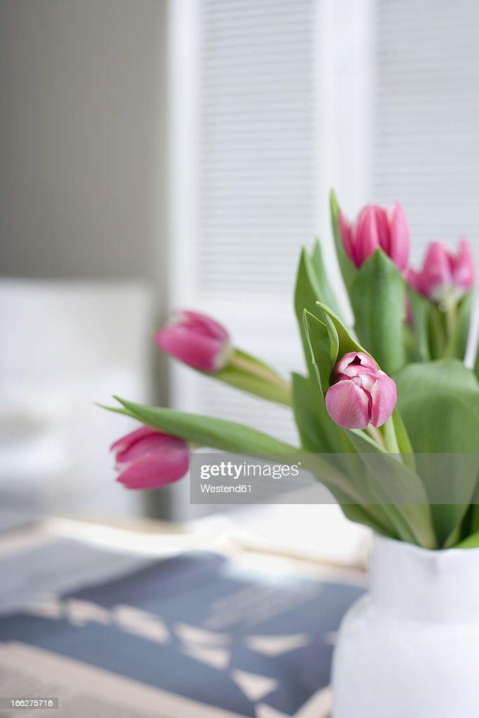 Tulips in flower vase : Stock Photo