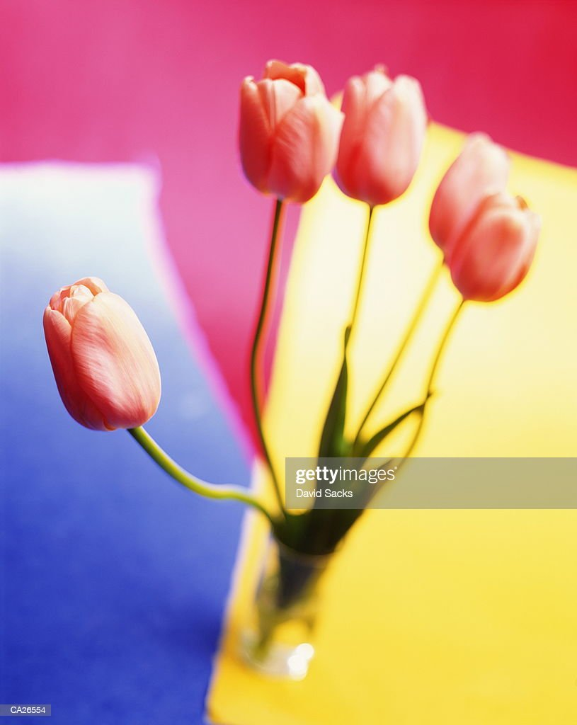 Tulips in glass vase, close-up : Stock Photo