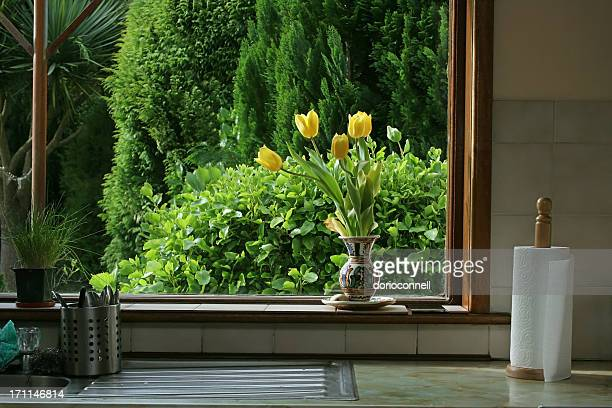 tulips in kitchen window