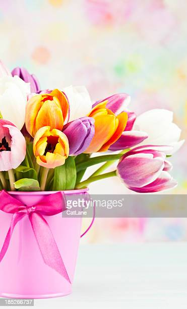 Tulips in Pink Pail with Copy Space