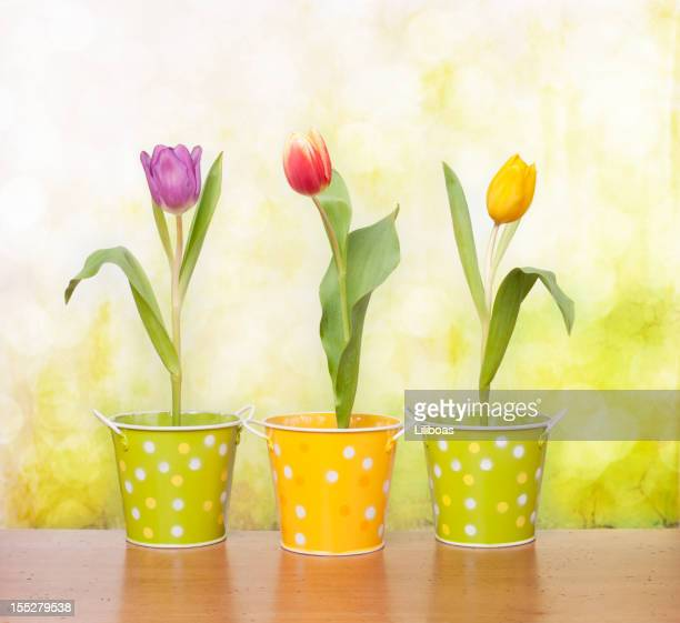 Tulips on a Bright Green Background