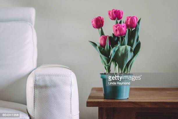 Tulips  on a wooden table next to a leather armchair
