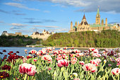 The Parliament building can be seen behind the Rideau and some colorful tulips.