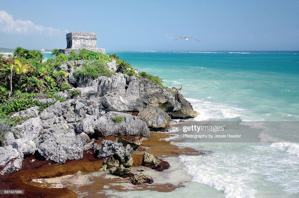 Tulum ruins on beach with bird