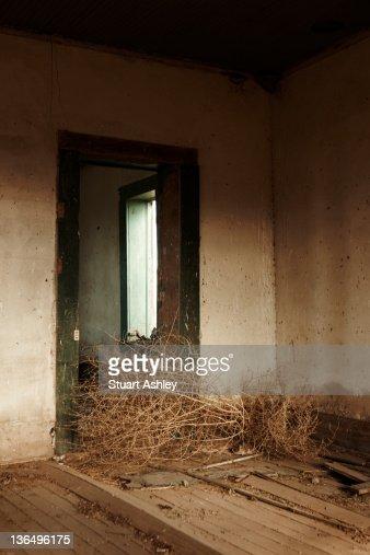 Tumbleweed in house : Stock Photo
