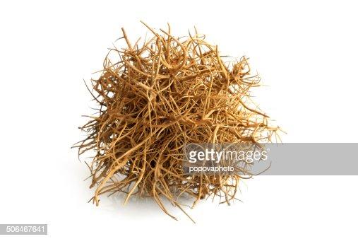 Tumbleweed : Stock Photo