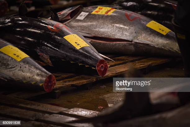 Tuna are laid out for inspection prior to the first auction of the year at Tsukiji Market in Tokyo Japan on Thursday Jan 5 2017 Kiyomura KK operator...