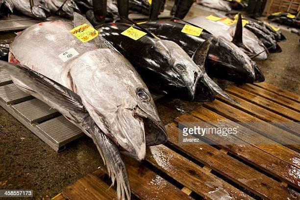 東京でマグロの魚市場