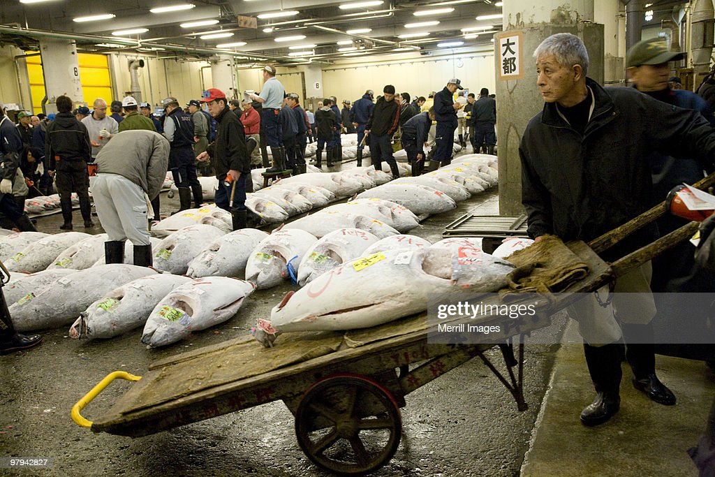 Tuna being brought to auction