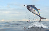 Tuna fish jumping to catch flying fishes in ocean 3d Render