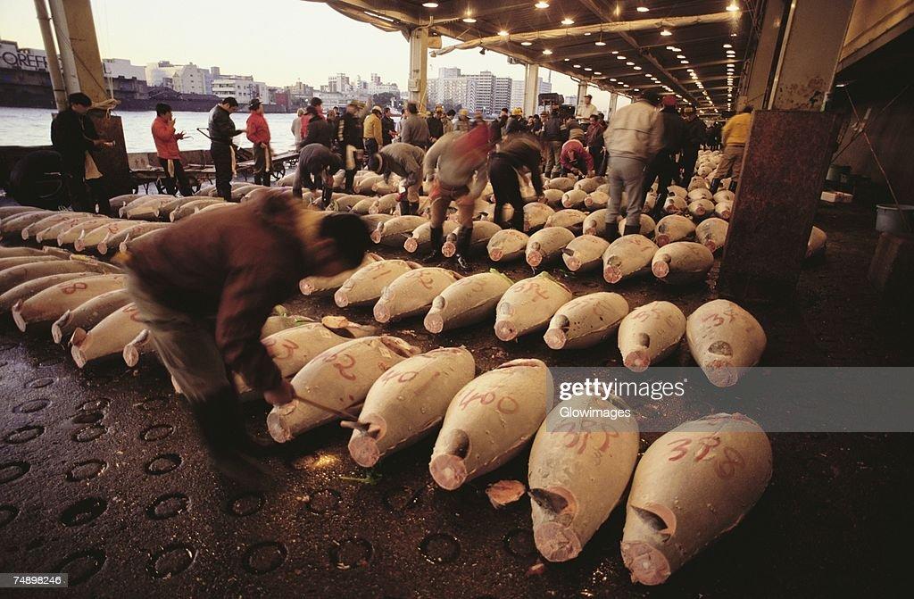 Tuna in a fish market, Tsukiji Fish market, Tsukiji, Tokyo Prefecture, Japan