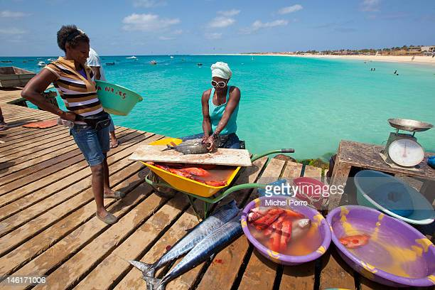 Tuna is brought in and sold at Santa Maria pier on May 15 2012 in Sal Rei Cape Verde Favorable exchange rates in the Cape Verde Islands have recently...