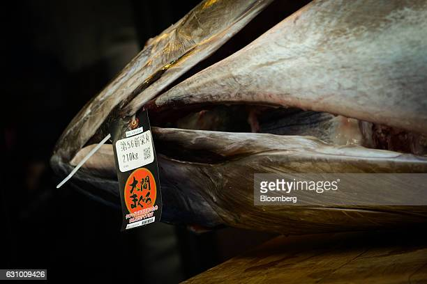 A tuna lying on it's side is seen on a table at a Sushi Zanmai restaurant in Tokyo Japan on Thursday Jan 5 2017 Kiyomura KK operator of Sushi Zanmai...