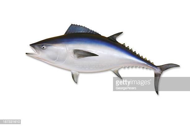 Tuna with Clipping Path