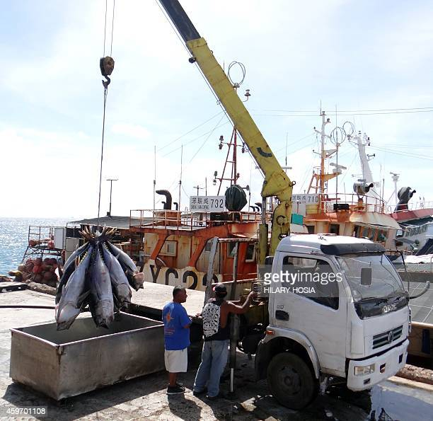 Tunas are offloaded from a longline fishing boat for export to international sashimi markets in Majuro on November 18 2014 Small Pacific island...