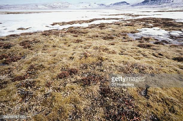 Tundra, Baffin Island, Canada, elevated view