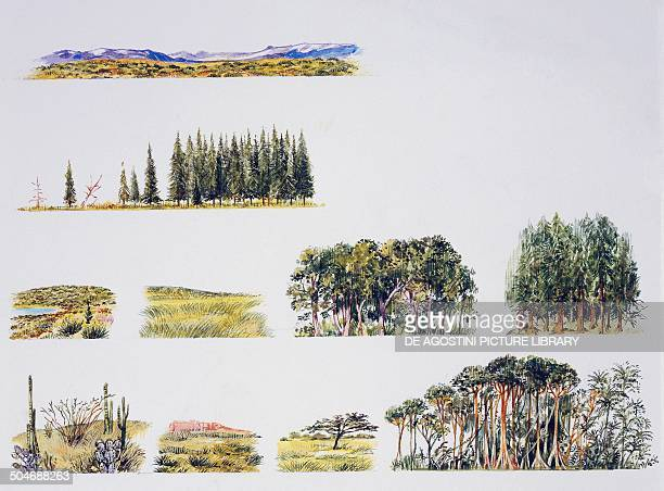 Tundra taiga cold desert cold grassland temperate deciduous forest temperate rainforest hot desert hot prairie savannah tropical deciduous forest...
