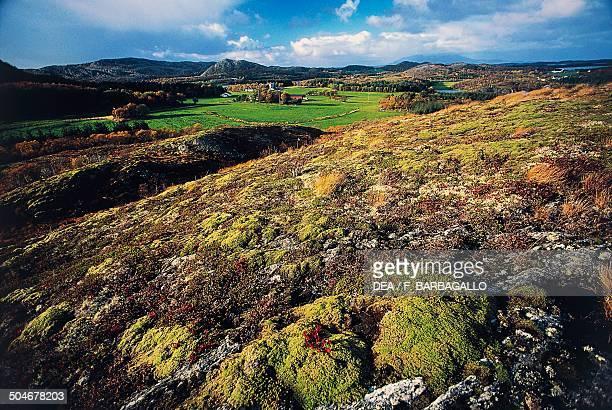 Tundra used as pasture Bronnoysund Nordland County Norway