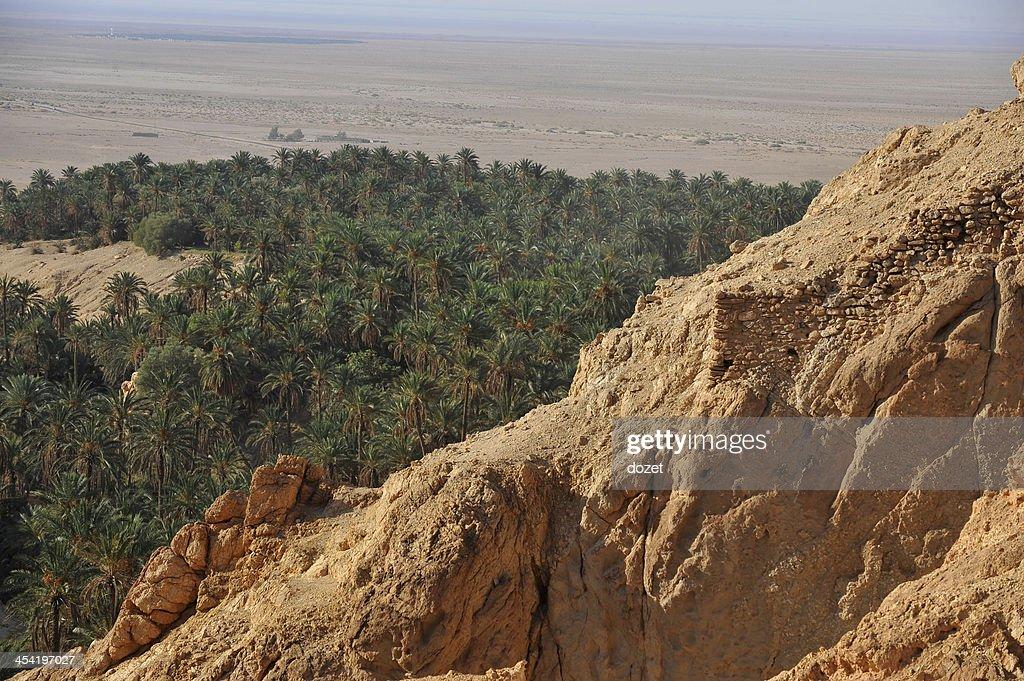 Tunisia- Oasis Chebika : Stock Photo