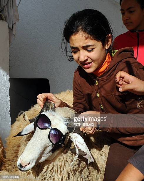 A Tunisian girl plays with a sheep placing sunglasses on it on the first day of the Muslim holiday of Eid alAdha on November 16 in Tunis Eid alAdha...