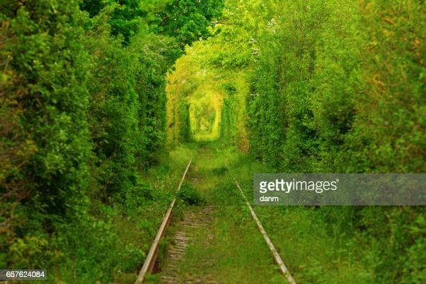 Tunnel -like path covered with bushes and trees with light at the end