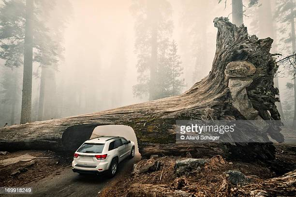 Tunnel Log, Sequoia National Park, USA
