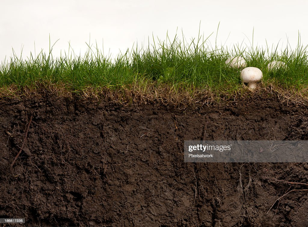 Turf and Earth Cross Section