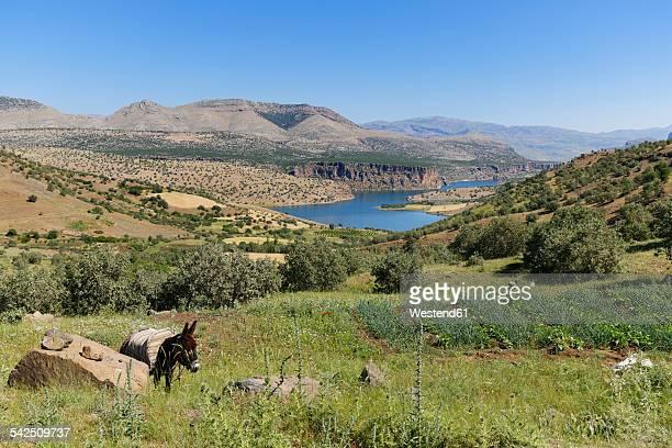 Turkey, Anatolia, South East Anatolia, Adiyaman Province, View to Reservoir Lake Atatuerk Dam, Donkey