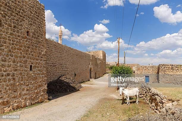 Turkey, Anatolia, South East Anatolia, Sirnak Province, village Haberli
