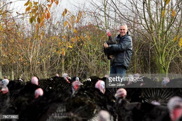 Turkey farmer Paul Kelly with his Kelly Bronze wild turkeys in their woodland home on November 22 2007 in Danbury Essex England It is the first year...