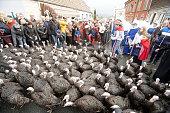 FRA: Licques Christmas Turkey Parade