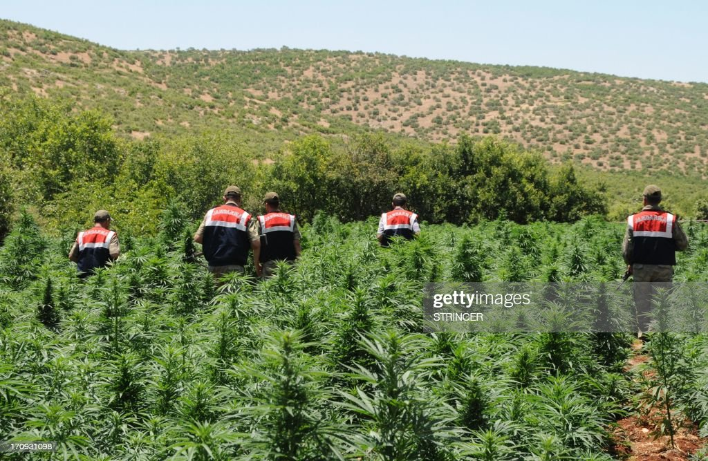Turkish soldiers arrive to destroy marijuana plants during an operation on June 20, 2013, at Lice in Diyarbakir.