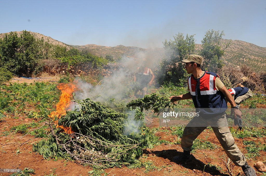 Turkish soldiers burn marijuana during an operation on July 8, 2013 in the Lice district of the southeastern city of Diyarbakir.