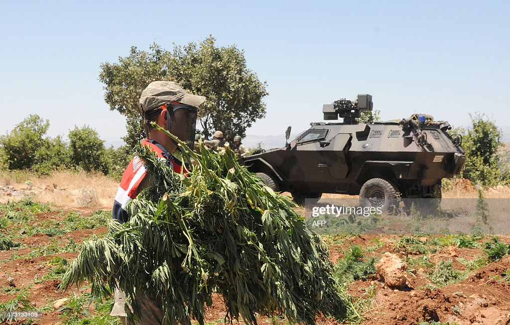 Turkish soldiers collect marijuana for burning during an operation on July 8, 2013 in the Lice district of the southeastern city of Diyarbakir.