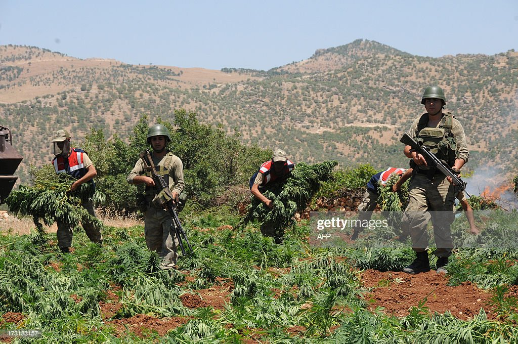 Turkish soldiers destroy a marijuana field during an operation on July 8, 2013 in the Lice district of the southeastern city of Diyarbakir. AFP PHOTO /MEHMET ENGIN