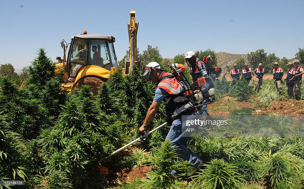 Turkish soldiers destroy marijuana fields during an operation on July 8, 2013 in the Lice district of the southeastern city of Diyarbakir.