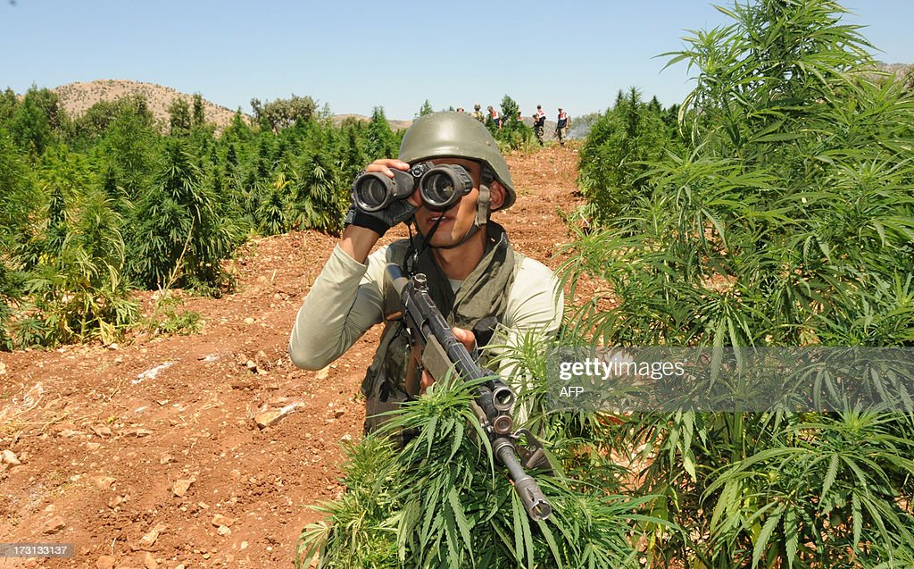 Turkish soldiers take position in a marijuana field during an operation on July 8, 2013 in the Lice district of the southeastern city of Diyarbakir.