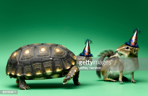 turtle and chipmunk wearing party hats : Stock Photo