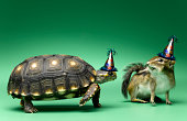 turtle and chipmunk wearing party hats