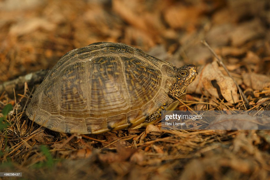 Turtle Basking In A Shaft Of Warm Sunlight Stock Photo Getty Images