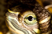 Macro of a turtle face