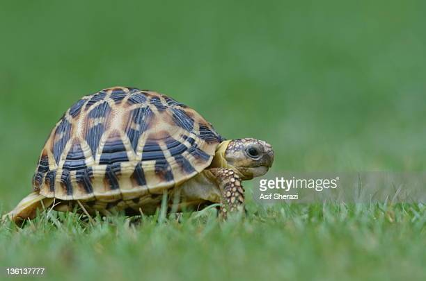 Turtle crawling on grass