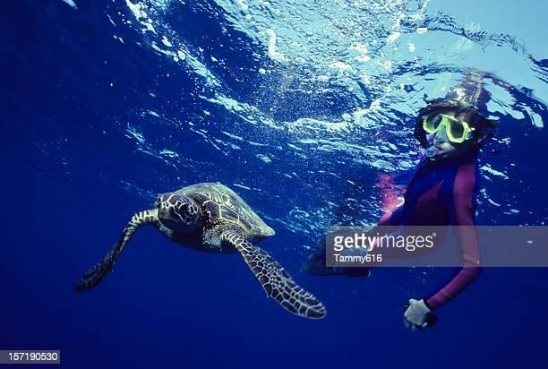 Schildkröte-Tanz