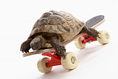 Turtle on skateboard