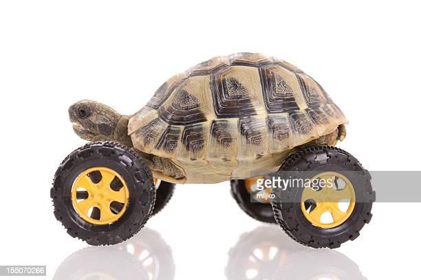 Schildkröten auf dem Rad