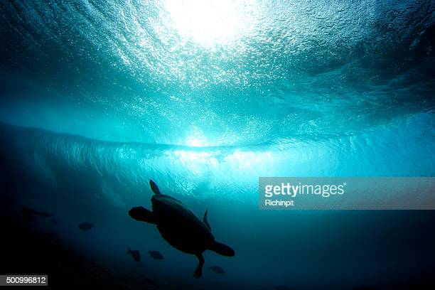 Turtle playing with the fish under a wave